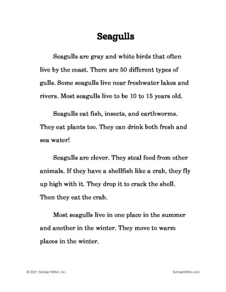 Grade 2: Seagulls  (Student)